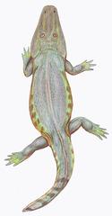 Tryphosuchus