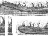 Newtonsaurus