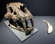 Lund's Smilodon populator