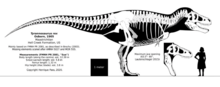 Tyrannosaurus rex skeletal reconstruction by randomdinos ddqrrq4-pre