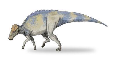 Brachylophosaurus-v4