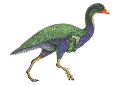 Patagopteryx