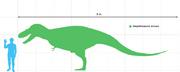 Daspletosaurusscale