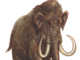 Woolly mammoth/Gallery
