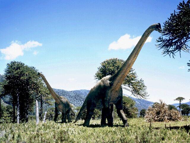 File:Brachiosaurus eating- crunch!.jpg
