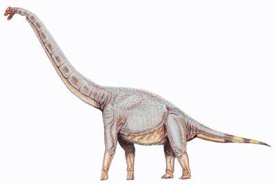 105 Sonorasaurus