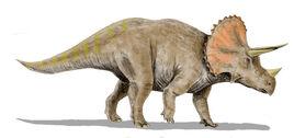 02 Triceratops