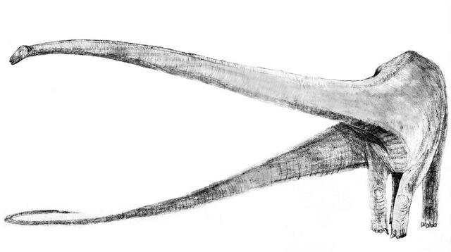 File:Mamenchisaurus Sketch.jpg
