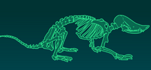 Скелет некролеста