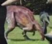 ParasaurJW