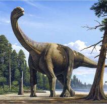 Rm camarasaurus