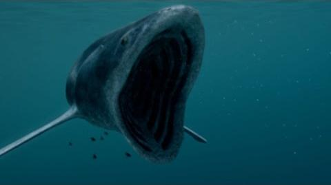 The Whale Shark Is a Small Fry Compared to Biggest Fish Ever
