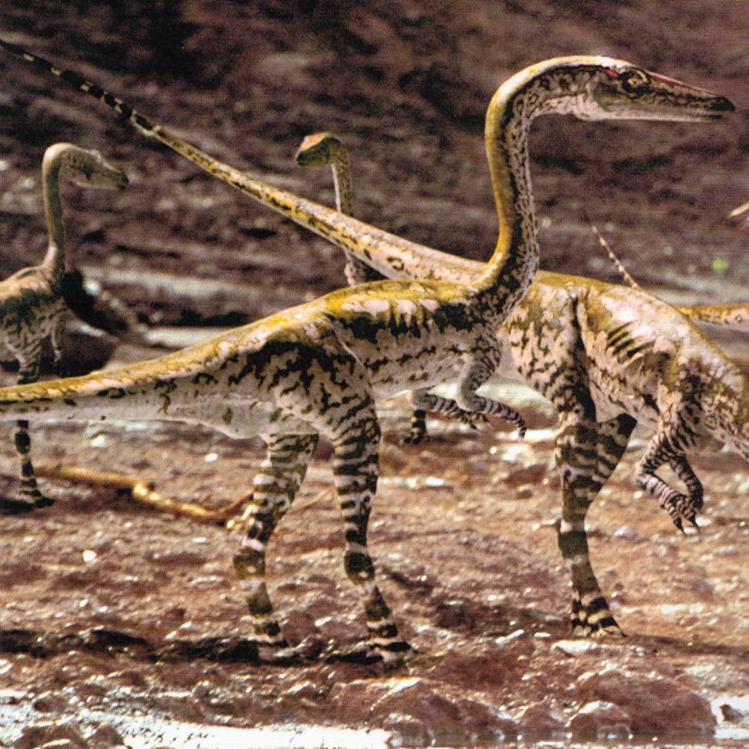 Cover-coelophysis