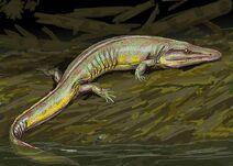 Chenoprosopus