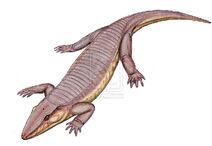 Chroniosaurus