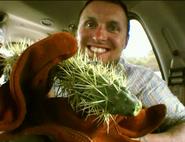Cactusincident