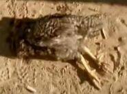 Dead Derek