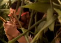 Bamboo shoot 2
