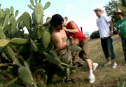 Cactus fall2
