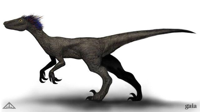 File:Raptor running.jpg