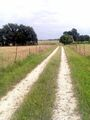 The road to the grove.jpg