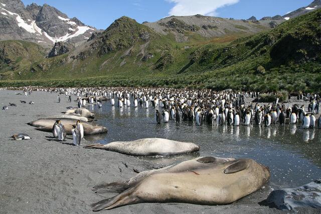File:Antarctica1.jpg