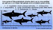 Large-prehistoric-shark-comparison
