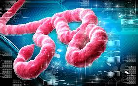 File:Newnew ebola.jpg