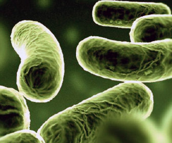 File:Vibrio cholerae.jpg