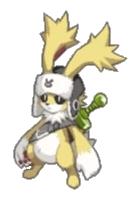 D5-rabbit-4