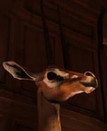 Gazelle4