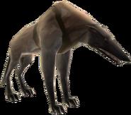 Wolfhound - basic