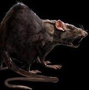 183px-Rat concept art