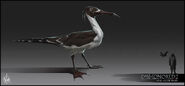 Mathieu-reydellet-disho-2-chara-gull