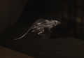 05 white rat2.png