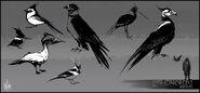 Mathieu-reydellet-disho-2-chara-bird-study-01