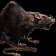Rat concept