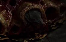 Кровосос1