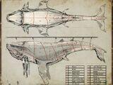 活体解剖鲸鱼(书籍)