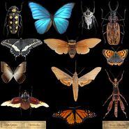 Бабочки текстуры