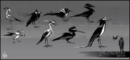 Mathieu-reydellet-disho-2-chara-bird-study-02