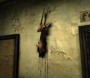 Gazelle 6