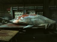 Shark all