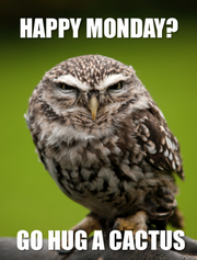 Morning Grouch Owl