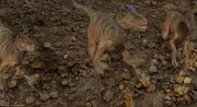 Velociraptor 2