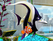 Gill with Nemo