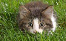 Cute-Kitten-kittens-16096139-1280-800
