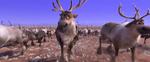 Frozen II - Reindeers