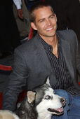 Paul Walker with Malamute at 8 Below Premiere