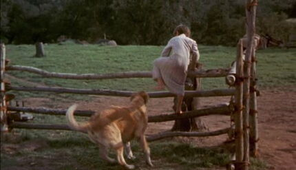 Old-yeller-disneyscreencaps.com-1474